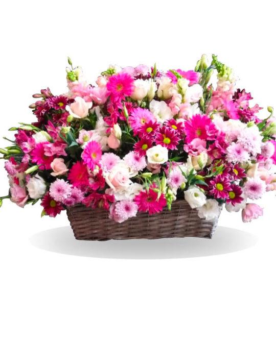 Fleurs-Aux-Champs-Bonsai-Flowers-Plants