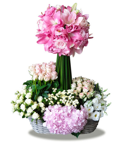 Pink-Contrast-Bonsai-Flowers-Plants