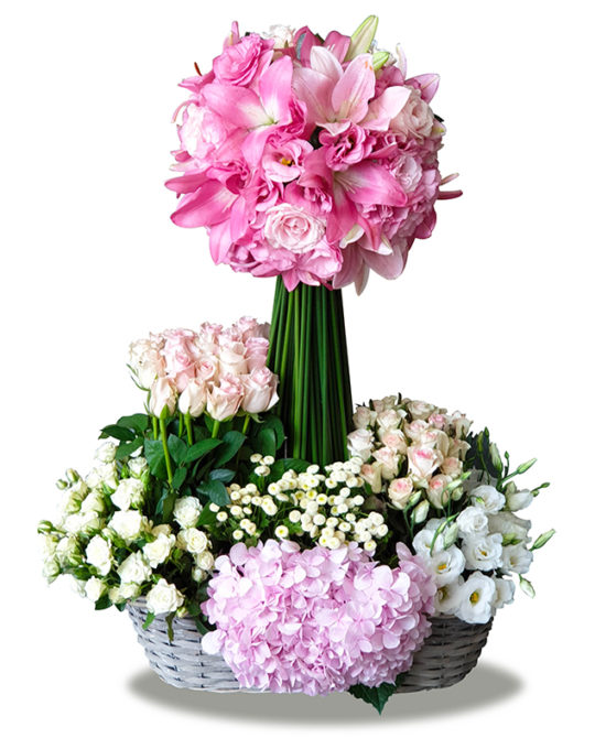 Pink-Contrast-Bonsai-Flowers-Plants