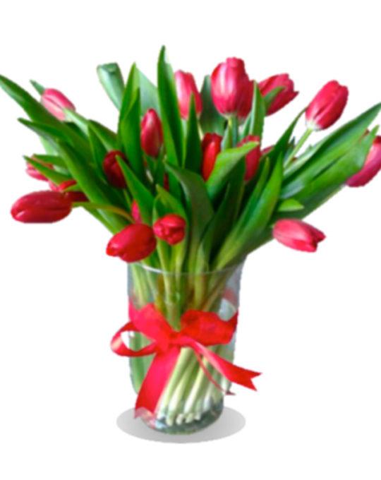Amsterdam-bonsai-flowers-plants