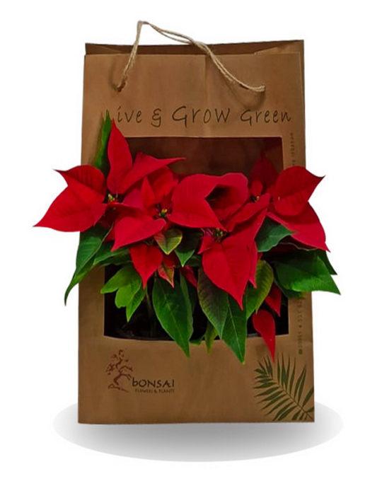 Christmas-Bag-Bonsai-flowers-Plants