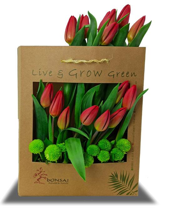 Eco-Love-Bonsai-Flowers-Plants