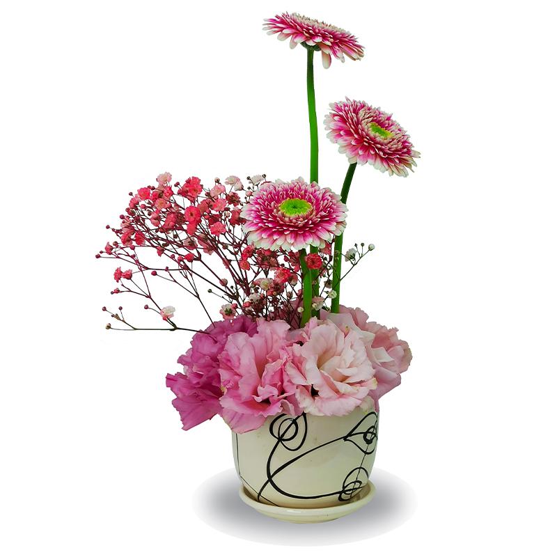 Pink-Dragon-Bonsai-Flowers-Plants